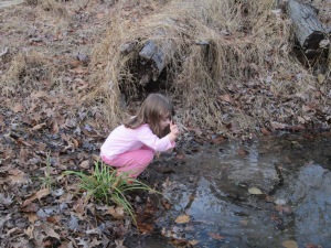 what's in the vernal pool?