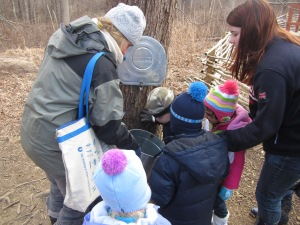 checking the sap buckets at the maple tree