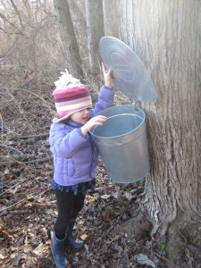 checking the sap bucket