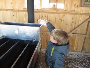 pouring sap into the evaporator