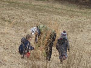exploring the winter meadow