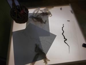 snake skin at the sensory table