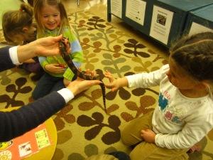 meeting the black rat snake