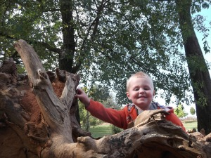 climbing an uprooted tree