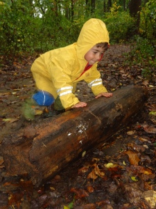 what's under a wet log?