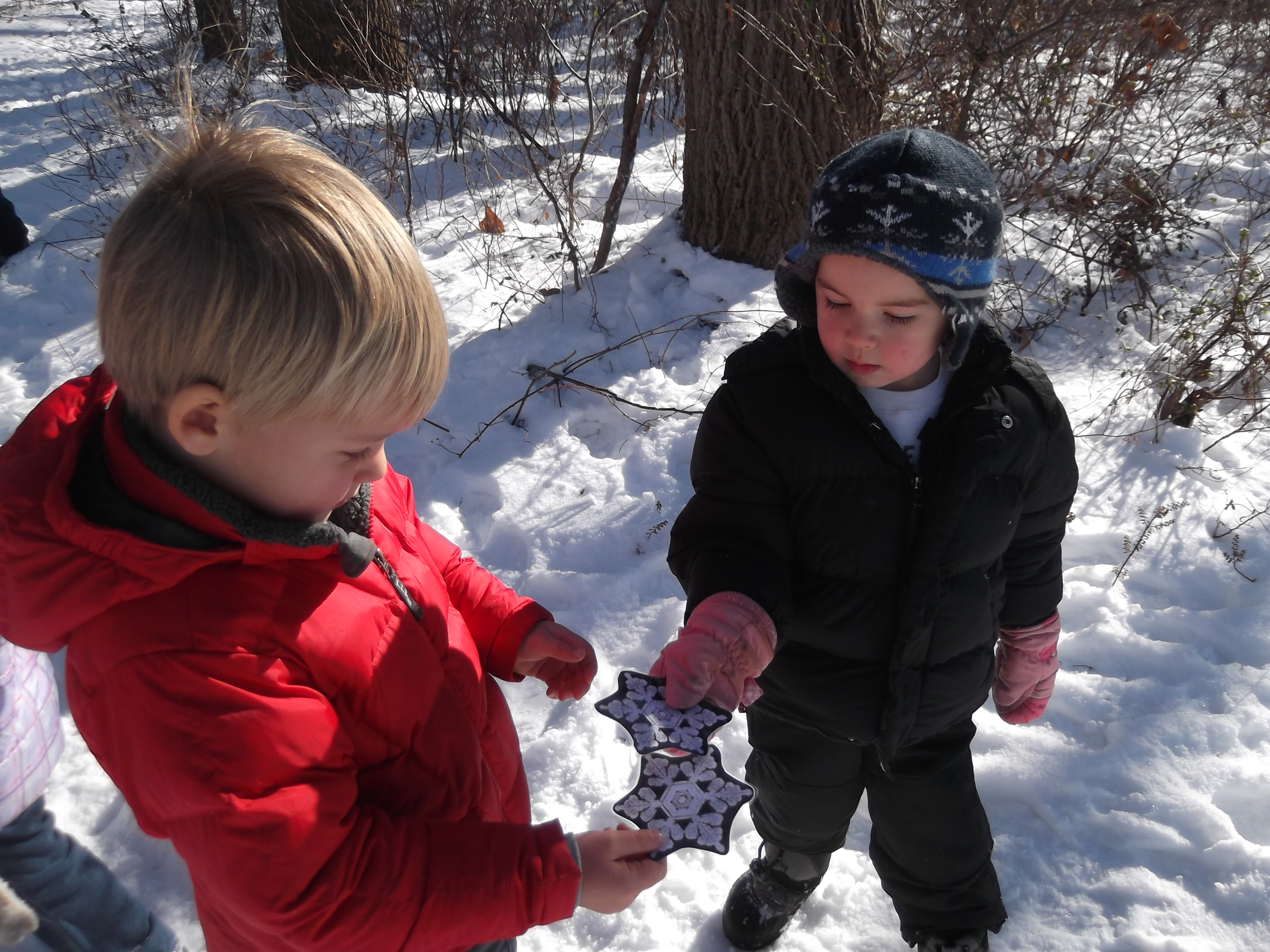 Us Trails In Early Childhood Education >> Hibernate, Migrate & Adapt   Irvine Nature Center
