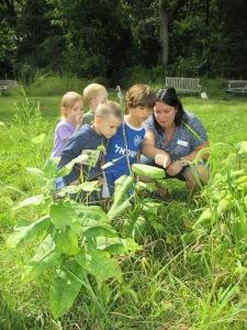 exploring milkweed in the meadow